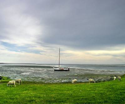 photo-boat-on-texel