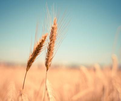 photo-grain-field-detail-nostalgic