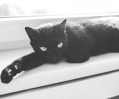 photo-black-cat-monochrome-cool