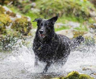 photo-black-dog-run-river