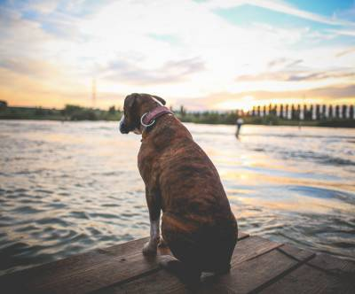 photo-dog-sit-wait-sunset