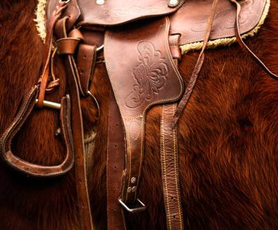 photo-hourse-saddle-brown-cool