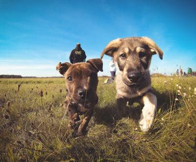 photo-little-puppies-friend-run-sky