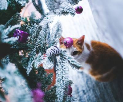 photo-cat-under-the-christmas-tree