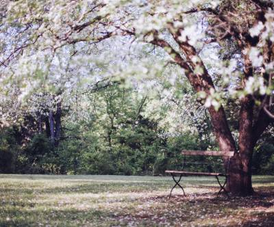 photo-cherry-blossoms-spring-bench