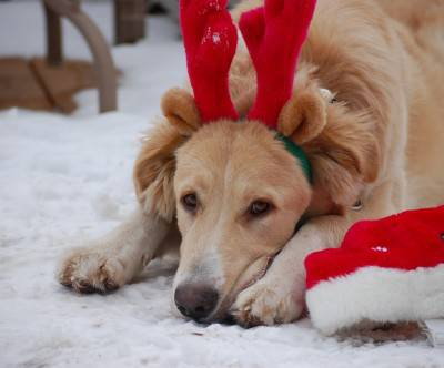 photo-dog-snow-christmas