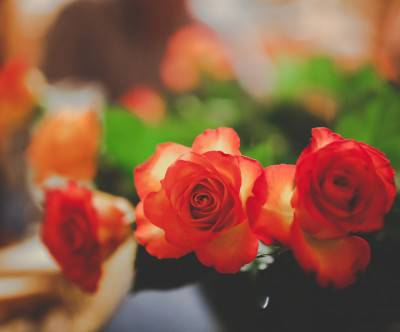 photo-flower-roses-bokeh-close-up