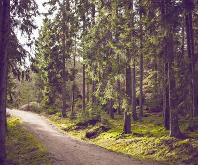 photo-forest-road-vintage-green