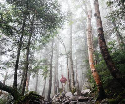 photo-forest-trekking-fog-man