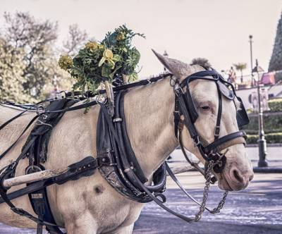 photo-horse-harness-coach-retro