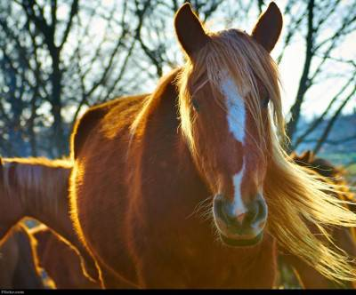 photo-horse-wind-brown-light