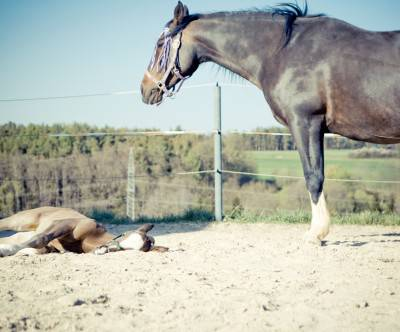 photo-horses-parent-child-vintage