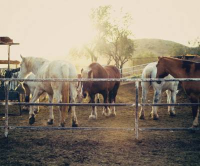 photo-horses-pasture-light-flare