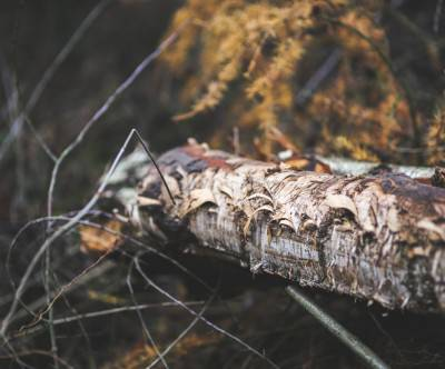 photo-ragged-tree-trunk-retro