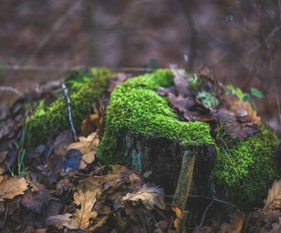 photo-tree-trunk-moss-fallen-leaves