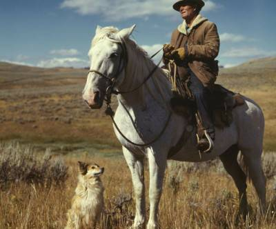 photo-white-horse-dog-man