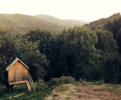 photo-forest-cabin-green-retro