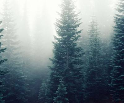 photo-forest-fog-natural-beautiful