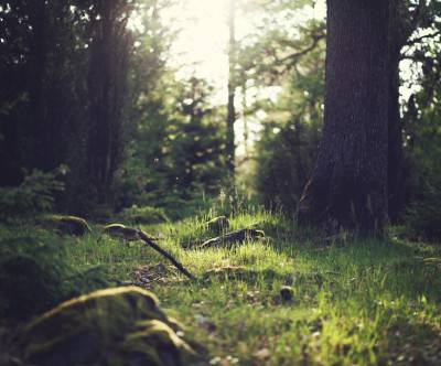 photo-forest-grass-sun-light-beautiful