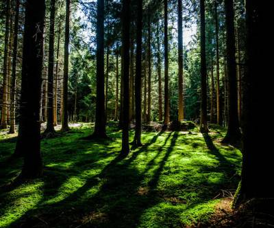 photo-forest-green-trees-backlight