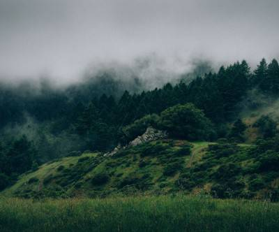photo-forest-mist-green-trees