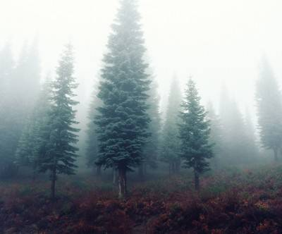 photo-forest-mist-trees-green