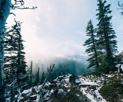 photo-forest-snow-hoodlookout-landscape