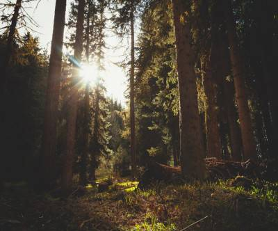 photo-forest-sun-flare-retro