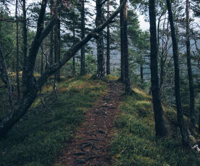 photo-forest-trail-tree-mountain