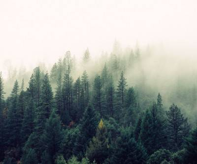 photo-forest-trees-green-foggy