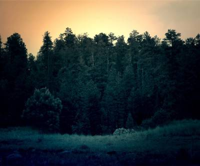 photo-forest-trees-retro-vintage