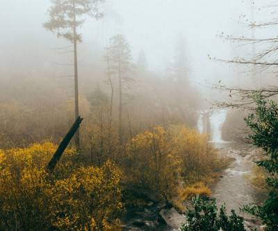 photo-forest-foggy-river-nature