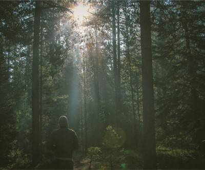 photo-forest-sunshine-fliage-man