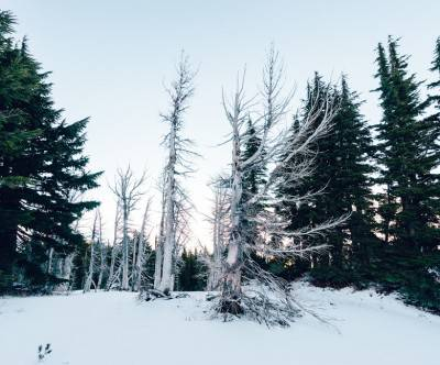 photo-winter-forest-snow-dormant