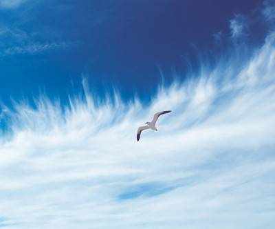 photo-bird-seagull-blue-sky