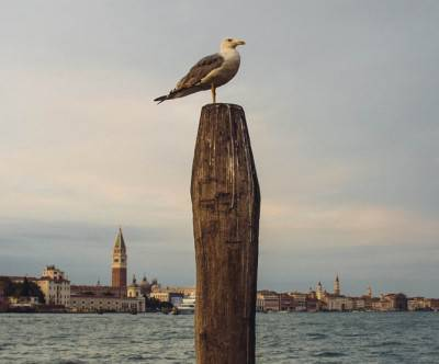 photo-bird-seagull-port-town