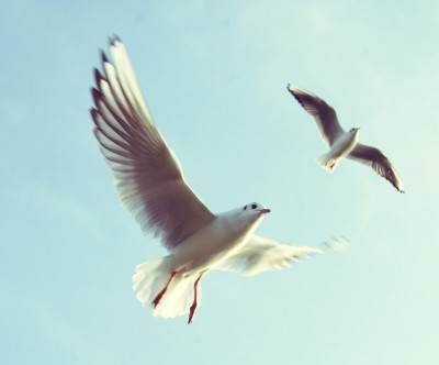 photo-bird-seagulls-sky-beautiful