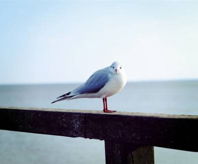photo-gull-blue-sea-beautiful