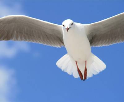 photo-gull-closeup-wing-sky